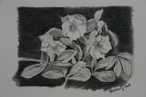 Wald, Rose, Schneerosen, Natur