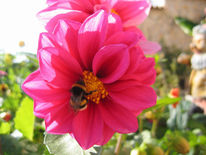 Blumen, Hummel, Digital, Pink