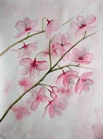 Frühling, Japanische kirschbluete, Stillleben, Rot