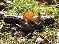 Fotografie, Stillleben, Natur