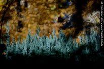 Impressionismus, Landschaft, Fotografie, Druck