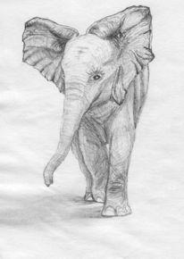 Afrika, Bleistiftzeichnung, Savanne, Baby elefant