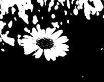 Schwarz weiß, Blumen, Digital, Natur