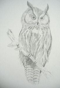 Bleistiftzeichnung, Tiere, Natur, Vogel