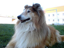 Hund, Tiere, Hundeportrait, Stolz