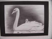 Cisne, White swan, Zeichnung, Schwan