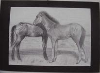 Zeichnung, Pferde, Bleistiftzeichnung, Tiere