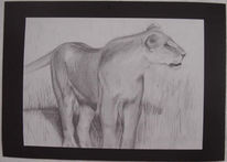 Afrika, Bleistiftzeichnung, Zeichnung, Löwin