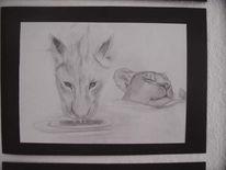 Tiere, Zeichnung, Bleistiftzeichnung, Natur