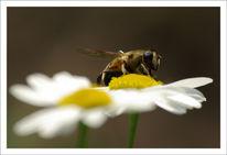 Blumen, Biene, Insekten, Landschaft