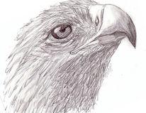 Zeichnung, Zeichnungen, Blick
