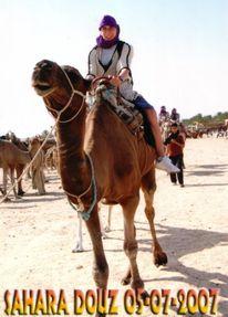Reiseimpressionen, Fotografie, Kamel