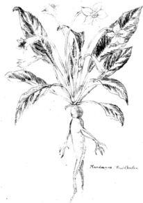 Arbeitszeit, Blumen, Knoten, Skizze