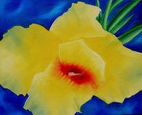 Blüte, Rosenrot, Blau, Blumen