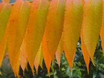 Pflanzen, Formation, Blätter, Fotografie