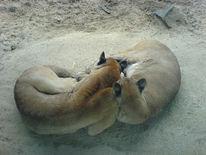 Fotografie, Puma, Tiere, Beziehung