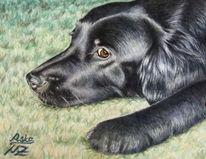 Portrait, Tiermalerei, Aquarellmalerei, Hundeportrait