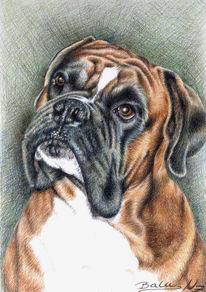 Tierportrait, Hund, Portrait, Hundeportrait