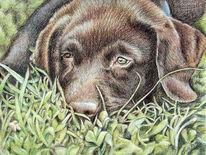 Hund, Pastellmalerei, Portrait, Tiere
