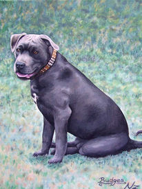 Hund, Hundeportrait, Portrait, Malerei