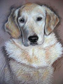 Hund, Tiere, Golden retriever, Pastellmalerei