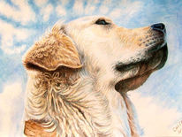 Retriever, Portrait, Hund, Wolken