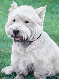 Hundeportrait, Hochland, Tiermalerei, Hund