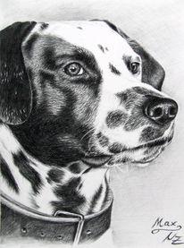 Kohlezeichnung, Dalmatiner, Tiere, Tiermalerei