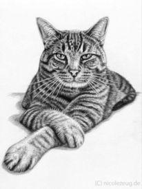 Portrait, Katze, Zeichnung, Plauderei