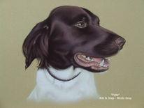Tierportrait, Hund, Münsterländer, Braun