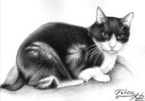 Katze, Fell, Tiere, Tiermalerei
