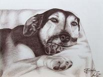 Zeichnung, Tierportrait, Hund, Tiermalerei