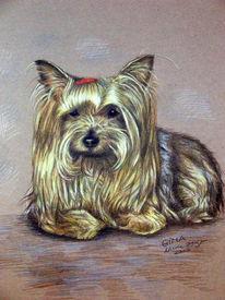 Tiere, Terrier, Zeichnung, Hund