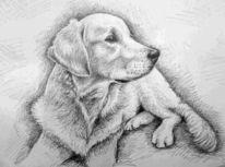 Tierportrait, Zeichnung, Hund, Tiere