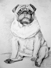 Mops, Hund, Tiere, Hundeportrait
