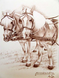 Tierportrait, Pferde, Kohlezeichnung, Haflinger