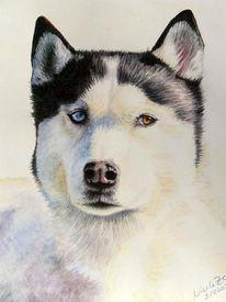 Portrait, Husky, Hund, Aquarellmalerei