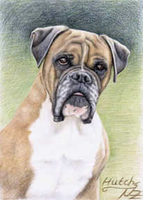 Portrait, Buntstiftzeichnung, Hund, Tiermalerei