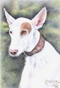 Tiermalerei, Windhund, Podenco, Tierportrait