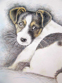 Tierportrait, Hund, Zeichnung, Welpe