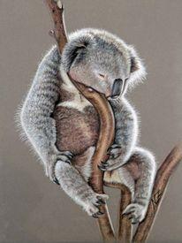 Zeichnung, Schlaf, Koala, Baum