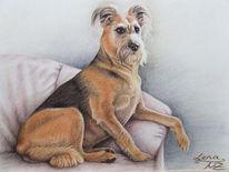 Zeichnung, Schnauzer, Hundezeichnung, Hundeportrait