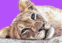 Zeichnung, Katzenaugen, Katze, Portrait