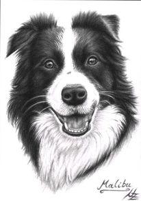Schwarz weiß, Portrait, Grenze, Hund
