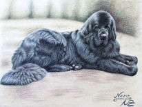 Hund, Tierportrait, Buntstiftzeichnung, Portrait
