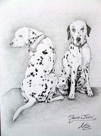 Dalmatiner, Hundeportrait, Grafit, Hund