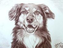 Kohlezeichnung, Zeichnung, Hundeportrait, Braun