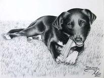 Hund, Labrador, Portrait, Tiere