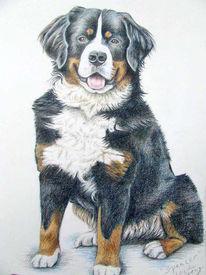 Tiere, Hundeportrait, Zeichnung, Tierportrait