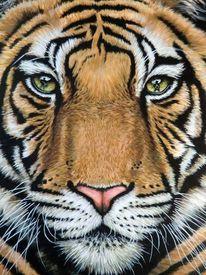 Tigerfell, Acrylmalerei, Spiegelung, Portrait